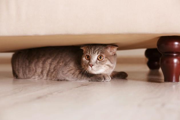 cat hiding under a sofa